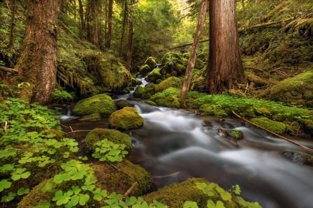 Drinking water is filtered by healthy forests