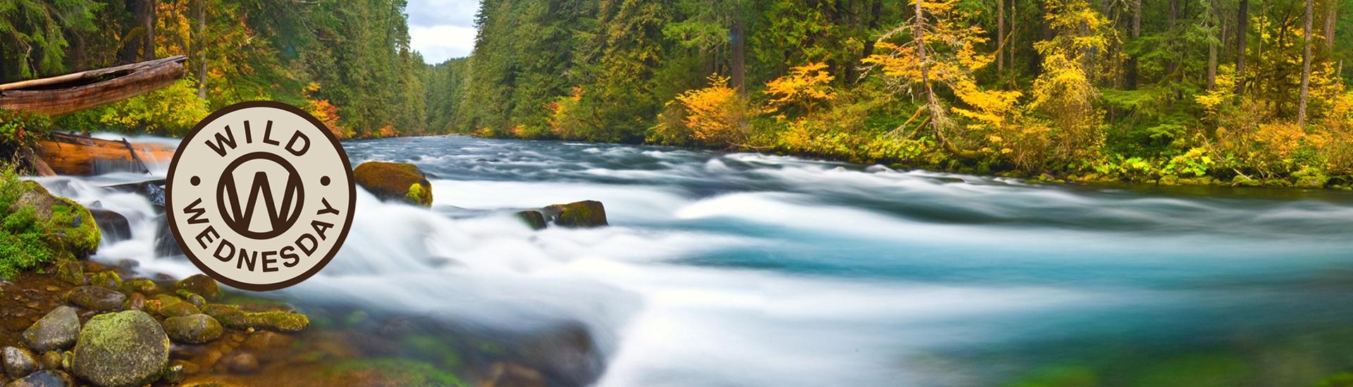 Oregon Wild Wednesday with Tim Palmer (McKenzie River by Joel Zak)
