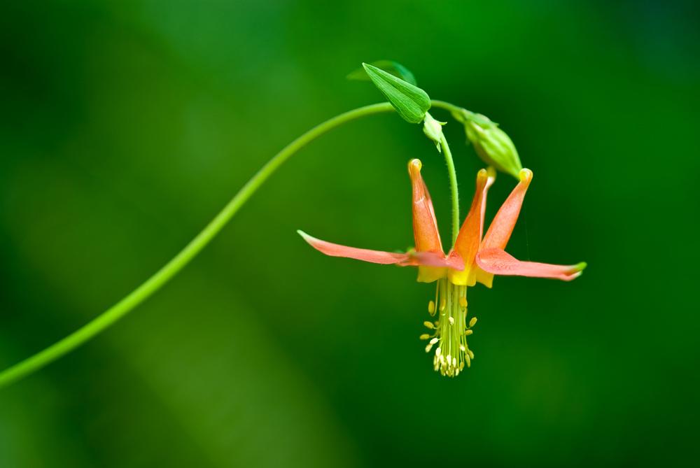 Kentucky Falls Wildflower (Photo by Larrie Easterly)