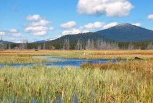 The high altitude wetland, Big Marsh near Crater Lake
