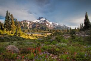 Mt. Jefferson in Full Bloom