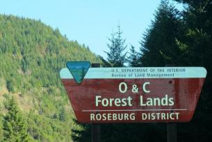 Forest Sign