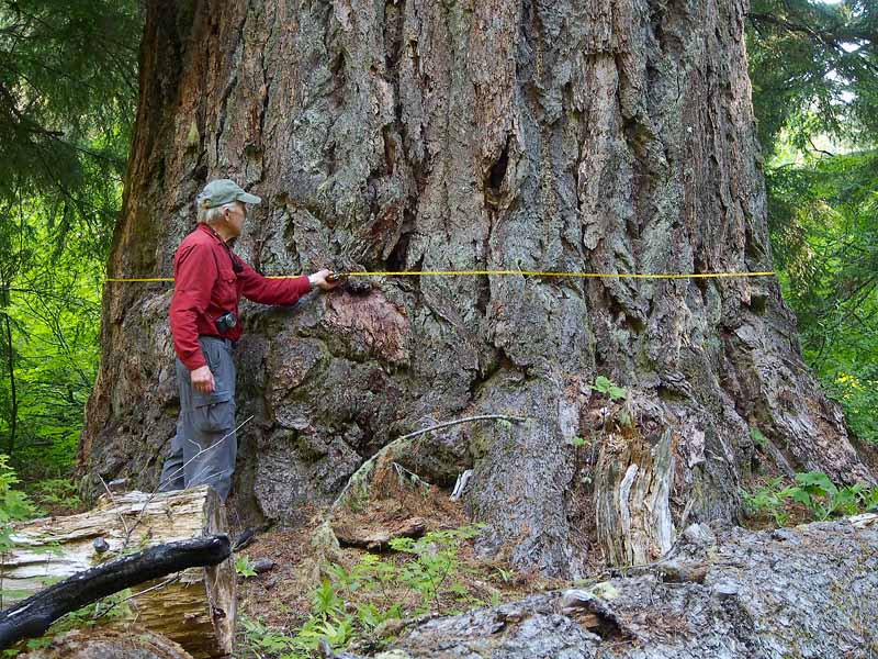 Hidden And Forgotten Oregon Old Growth Treasures Oregon Wild