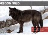 Wolf image © Donald A. Higgs